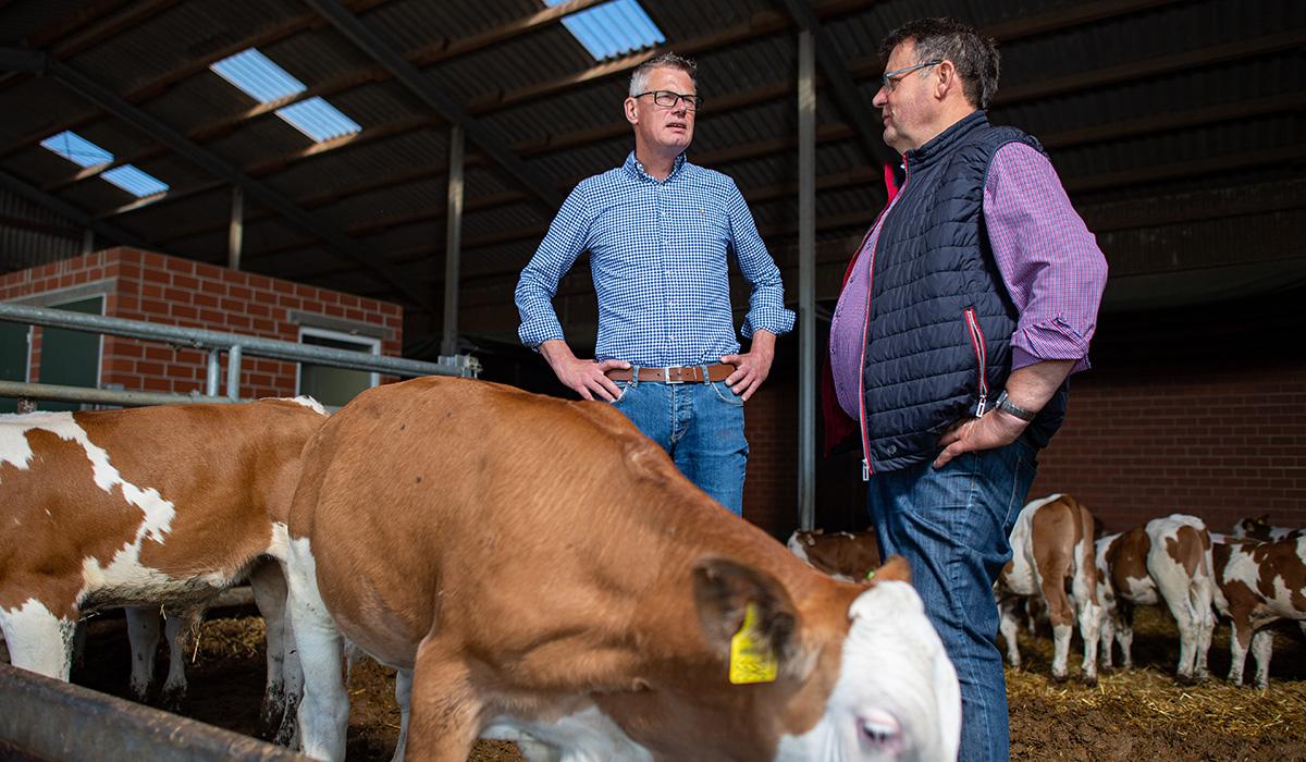 Ein Außendienstmitarbeiter der Venneker Gruppe steht mit einem Landwirt im Rinderstall.