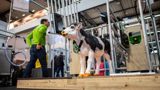 Eine Kalbfigur steht bei den AGRAR Unternehmertagen 2019 in der Halle Münsterland
